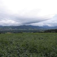 16 P1010987 Blick zum Traunstein